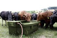 Pasture Drinkers (3)